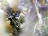 dirtbike_poster